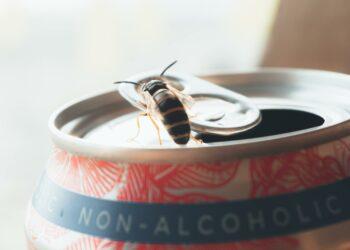 Non-Alcoholic vs Alcohol-Free